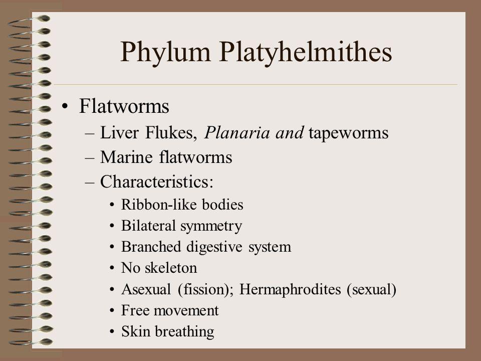 Phylum Platyhelmithes