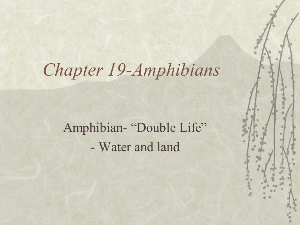 Amphibian- Double Life - Water and land