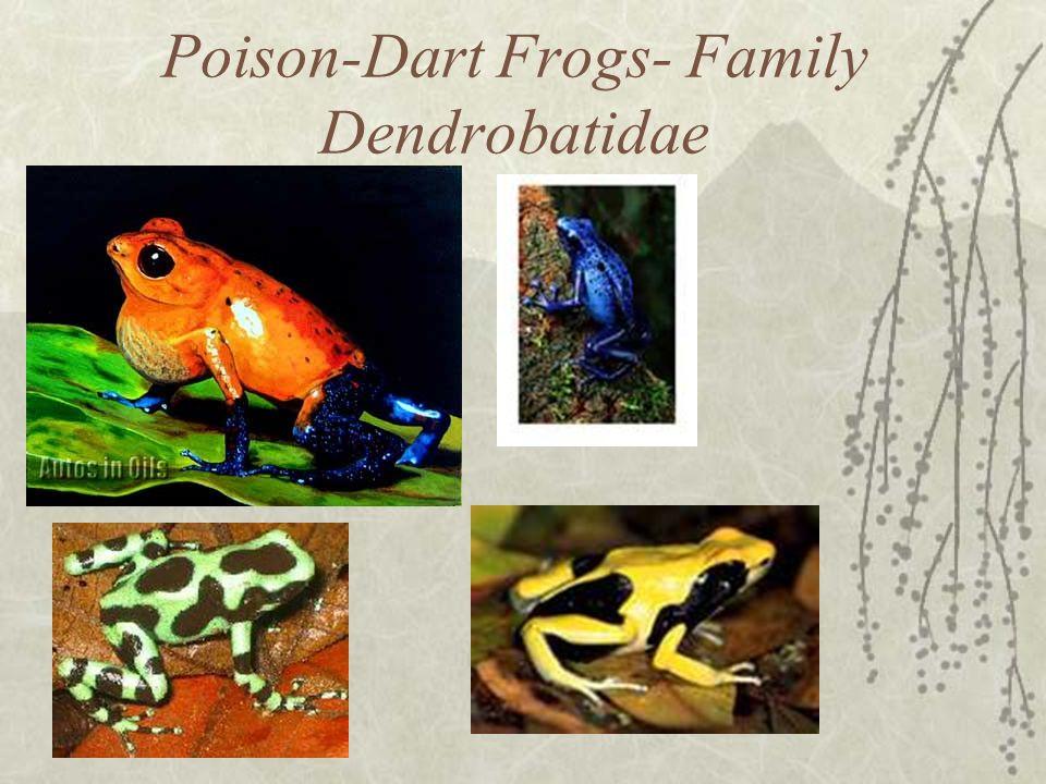 Poison-Dart Frogs- Family Dendrobatidae