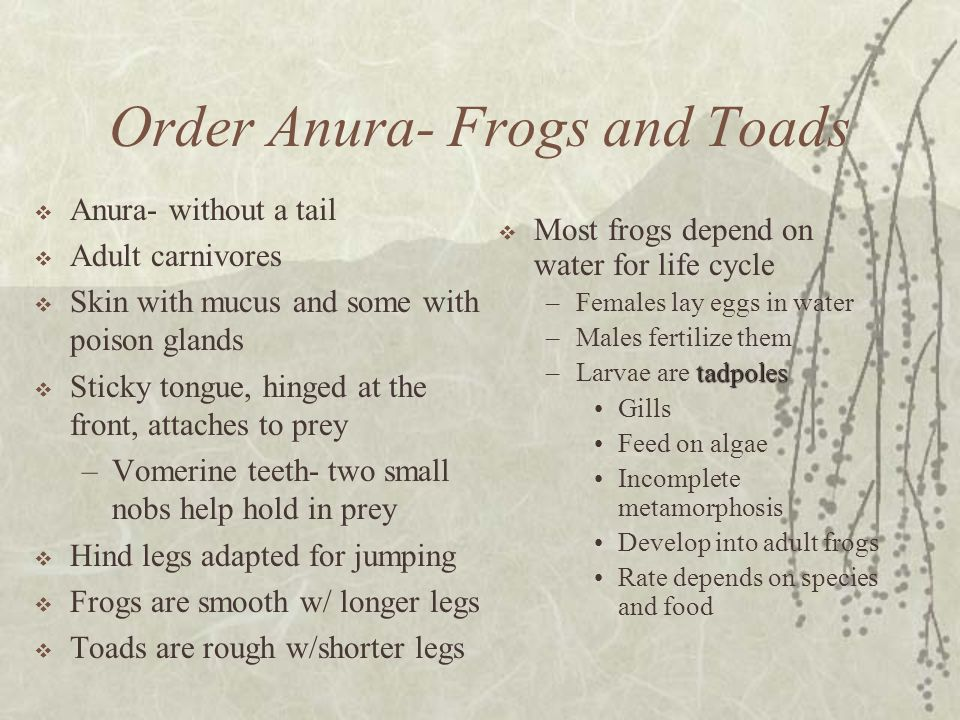 Order Anura- Frogs and Toads