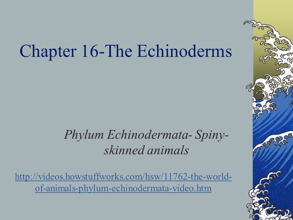 Chapter 16-The Echinoderms
