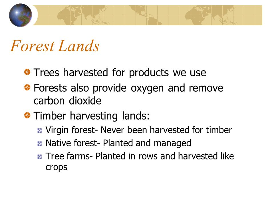 Forest Lands Trees harvested for products we use