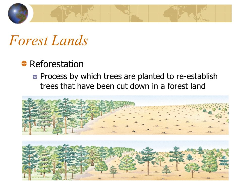 Forest Lands Reforestation
