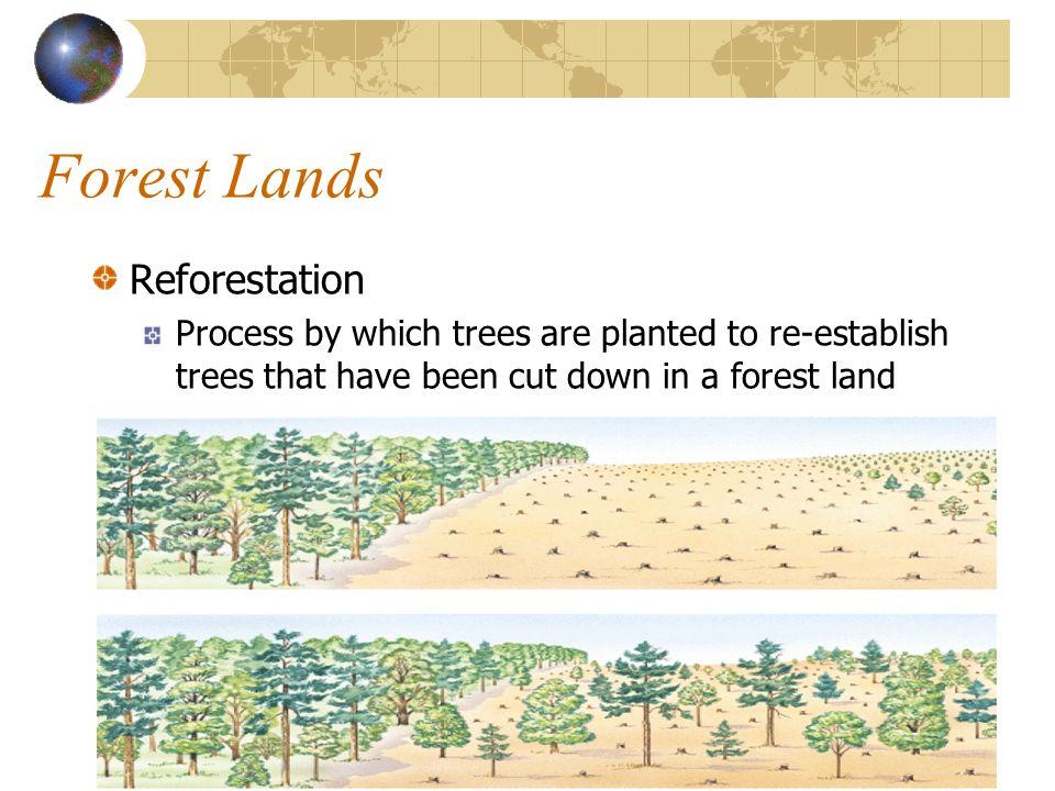 Forest Lands Reforestation
