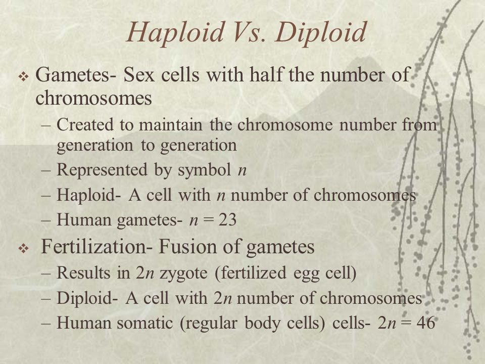 Haploid Vs. Diploid Gametes- Sex cells with half the number of chromosomes. Created to maintain the chromosome number from generation to generation.