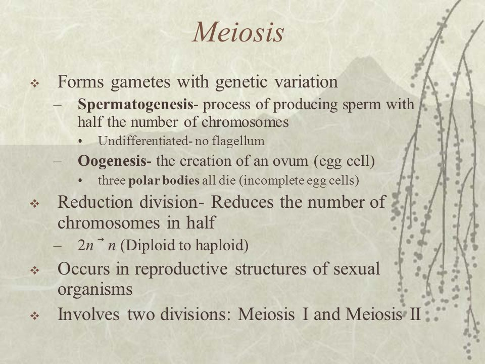 Meiosis Forms gametes with genetic variation