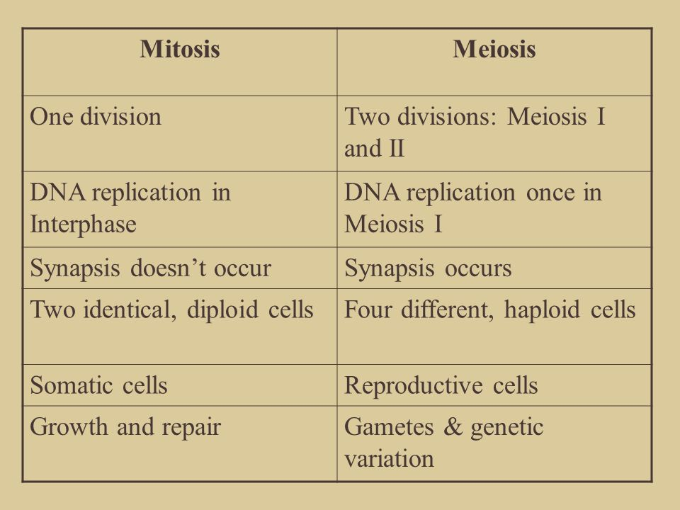 Mitosis Meiosis. One division. Two divisions: Meiosis I and II. DNA replication in Interphase. DNA replication once in Meiosis I.