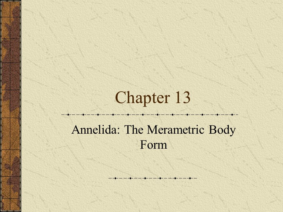 Annelida: The Merametric Body Form