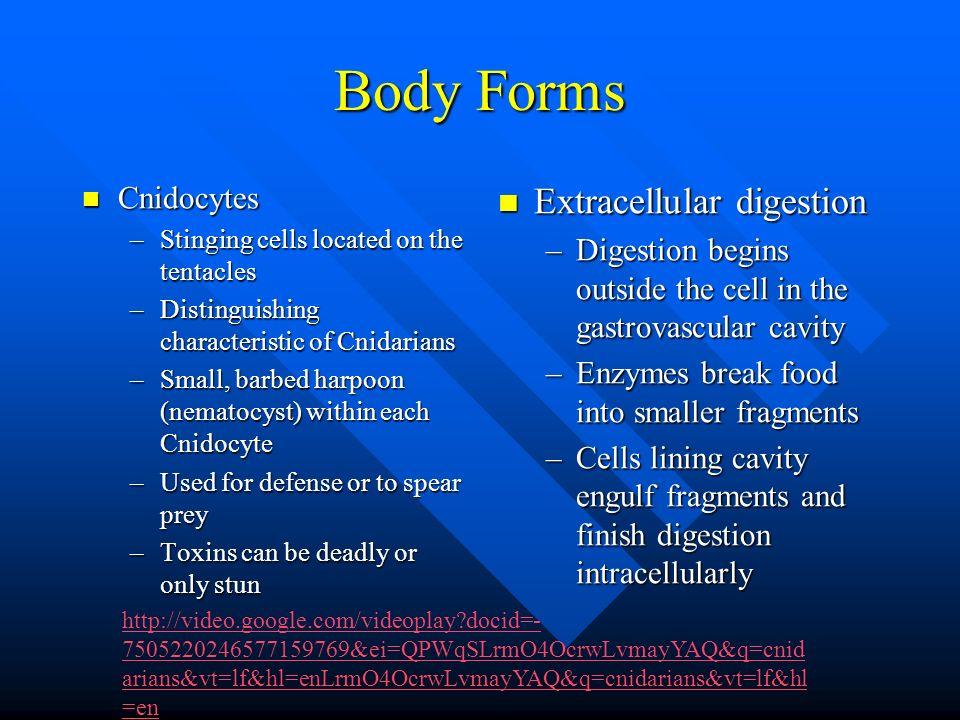 Body Forms Extracellular digestion Cnidocytes