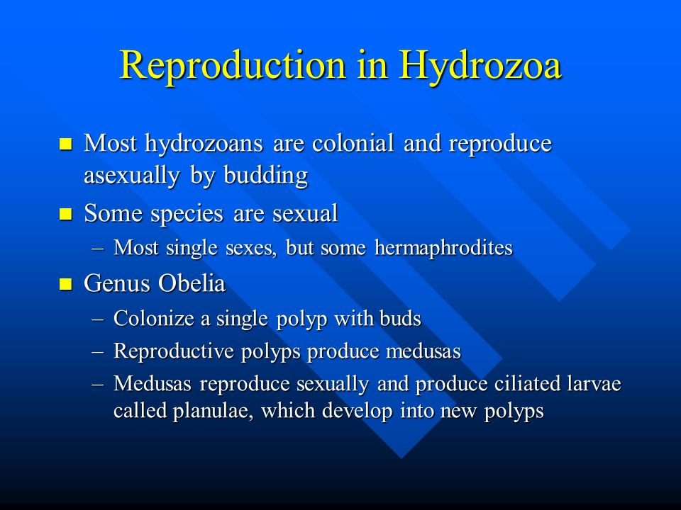 Reproduction in Hydrozoa