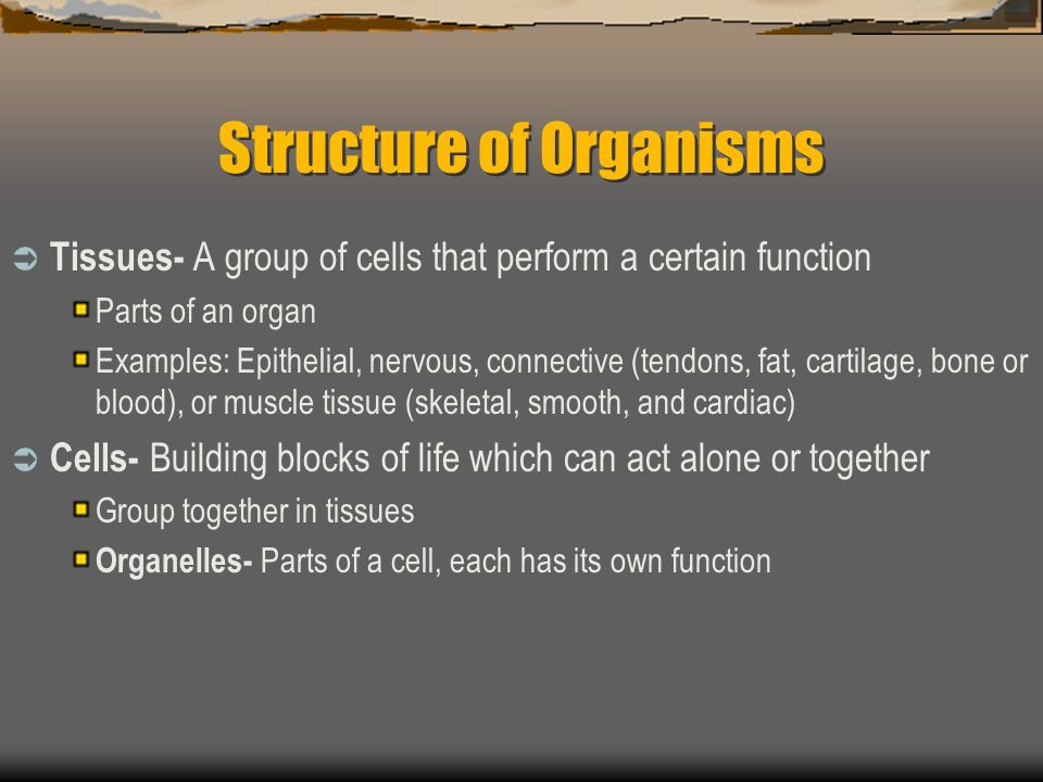Structure of Organisms