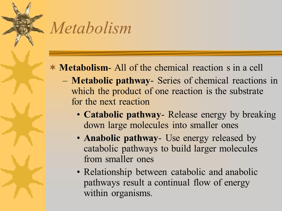 Metabolism Metabolism- All of the chemical reaction s in a cell