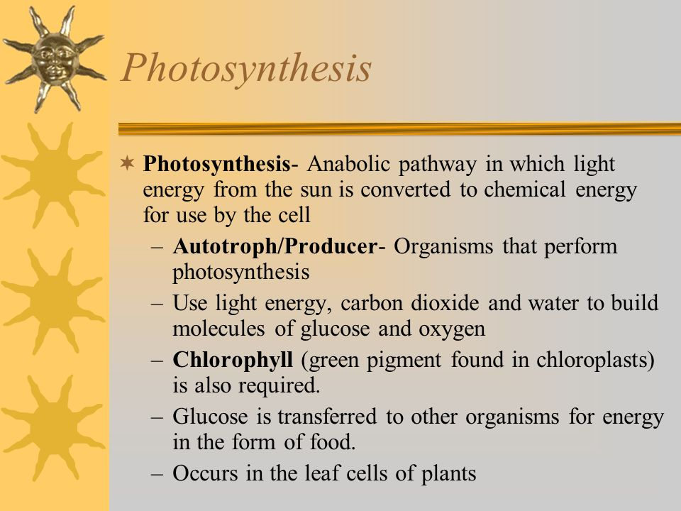 Photosynthesis Photosynthesis- Anabolic pathway in which light energy from the sun is converted to chemical energy for use by the cell.