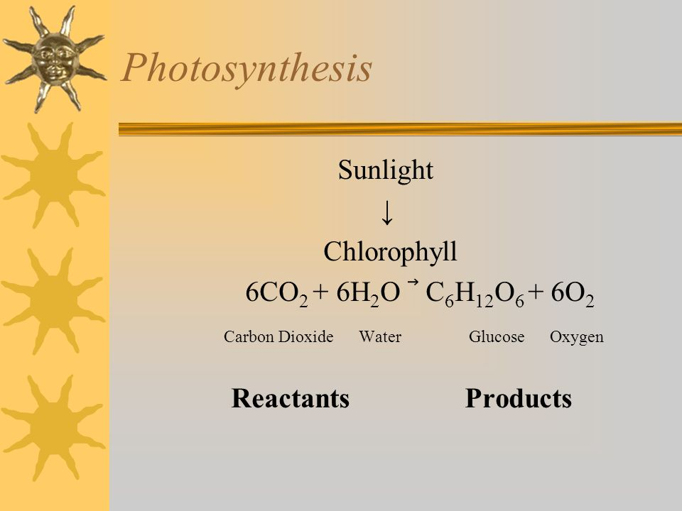 Photosynthesis Sunlight ↓ Chlorophyll 6CO2 + 6H2O ⃗ C6H12O6 + 6O2