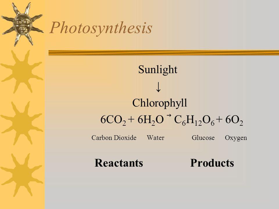 Photosynthesis Sunlight ↓ Chlorophyll 6CO2 + 6H2O ⃗ C6H12O6 + 6O2