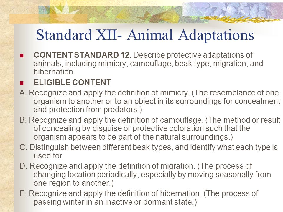 Standard XII- Animal Adaptations