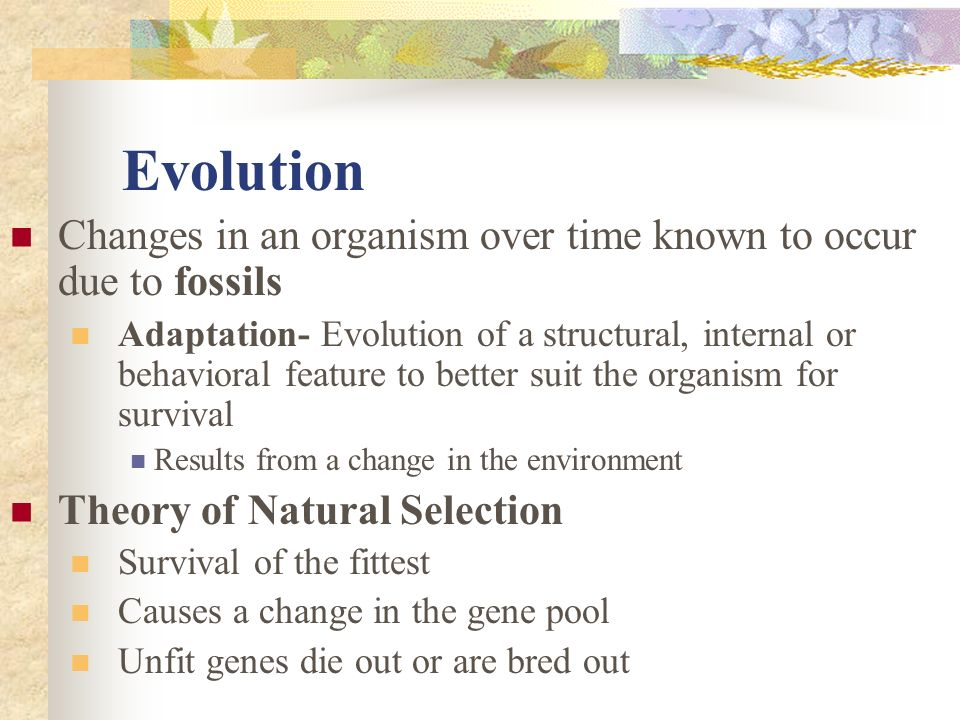 Evolution Changes in an organism over time known to occur due to fossils.