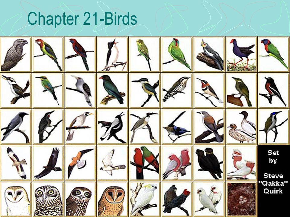 Chapter 21-Birds