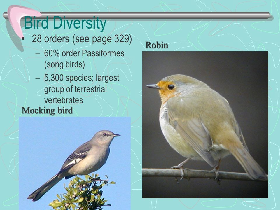 Bird Diversity 28 orders (see page 329)