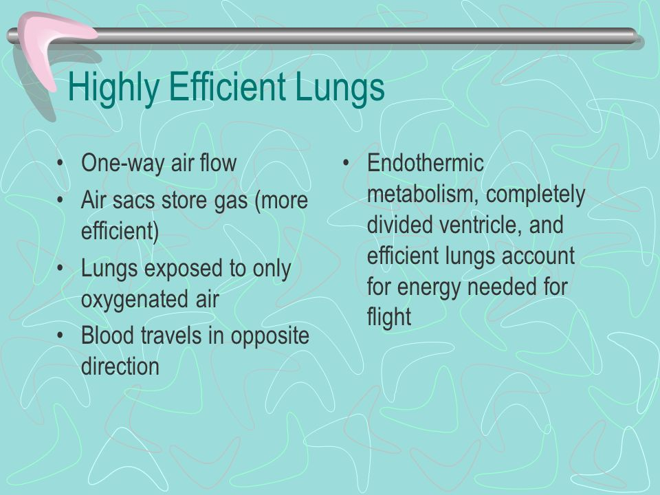Highly Efficient Lungs