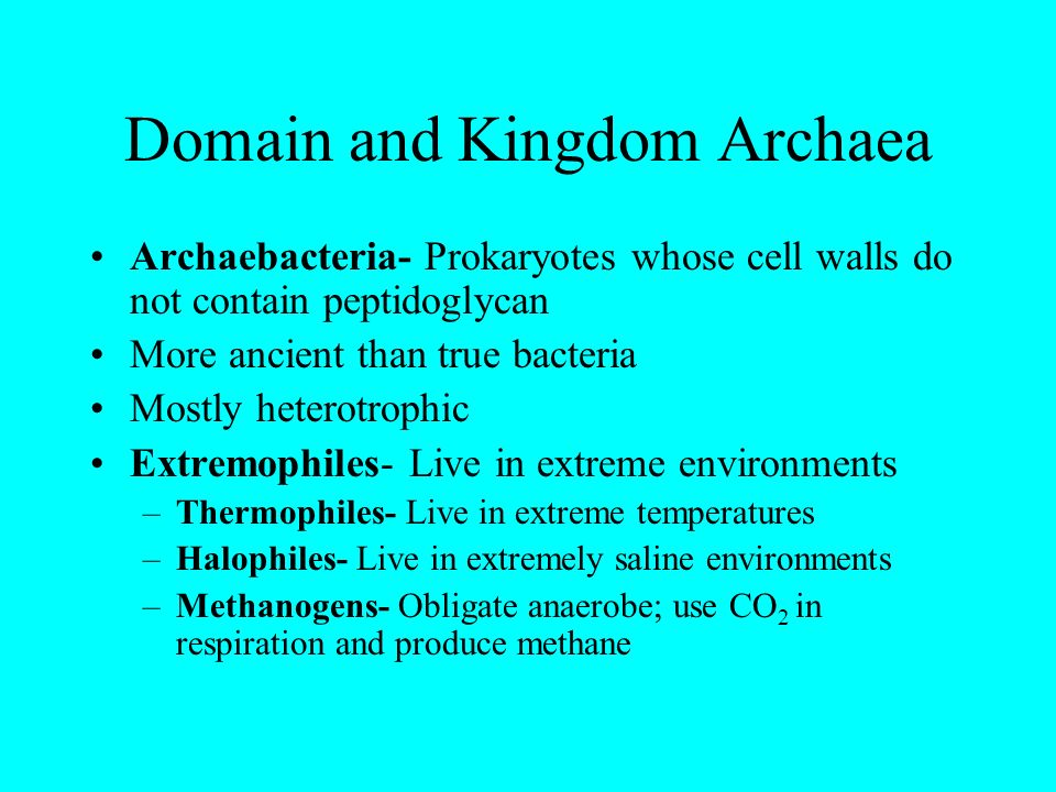 Domain and Kingdom Archaea