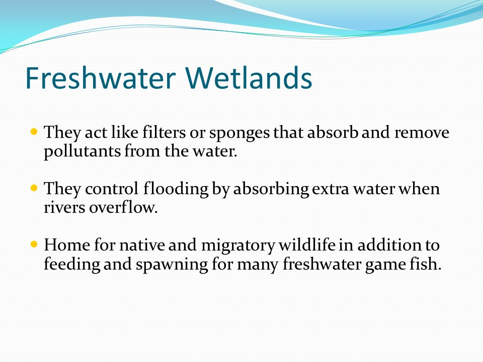 Freshwater Wetlands They act like filters or sponges that absorb and remove pollutants from the water.