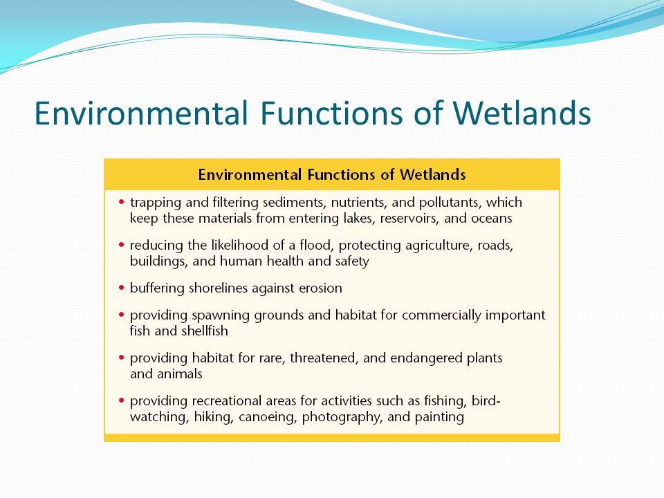 Environmental Functions of Wetlands