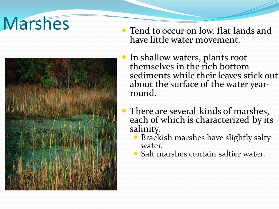 Marshes Tend to occur on low, flat lands and have little water movement.