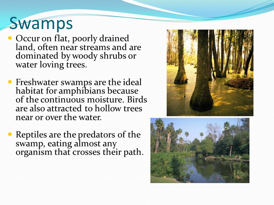 Swamps Occur on flat, poorly drained land, often near streams and are dominated by woody shrubs or water loving trees.