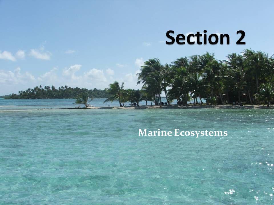 Section 2 Marine Ecosystems