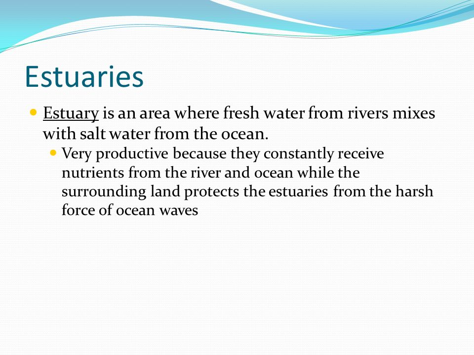 Estuaries Estuary is an area where fresh water from rivers mixes with salt water from the ocean.
