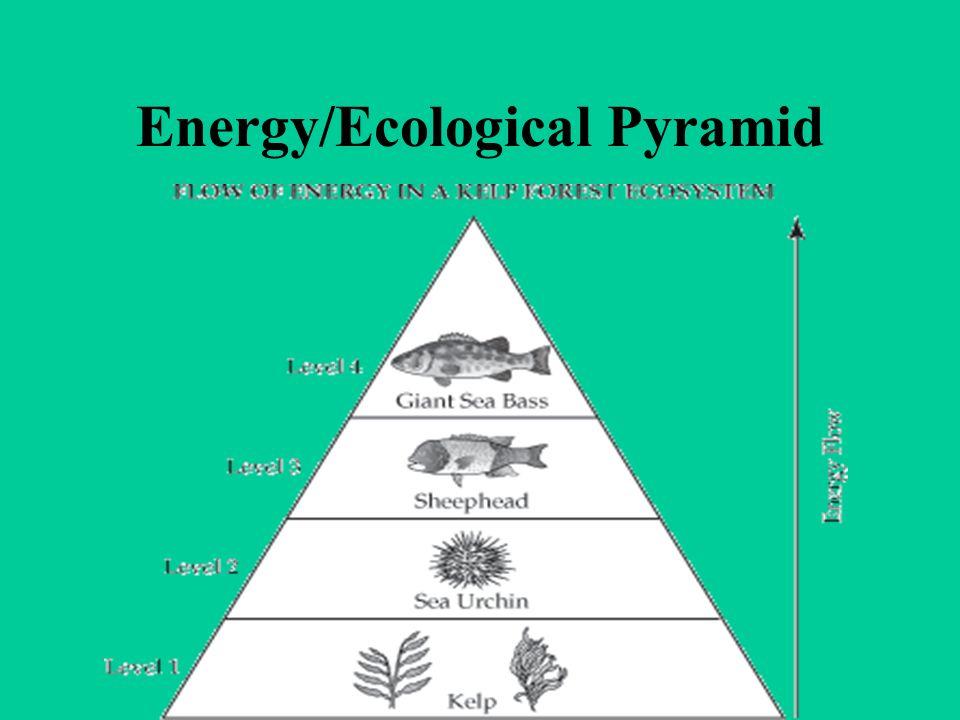 Energy/Ecological Pyramid