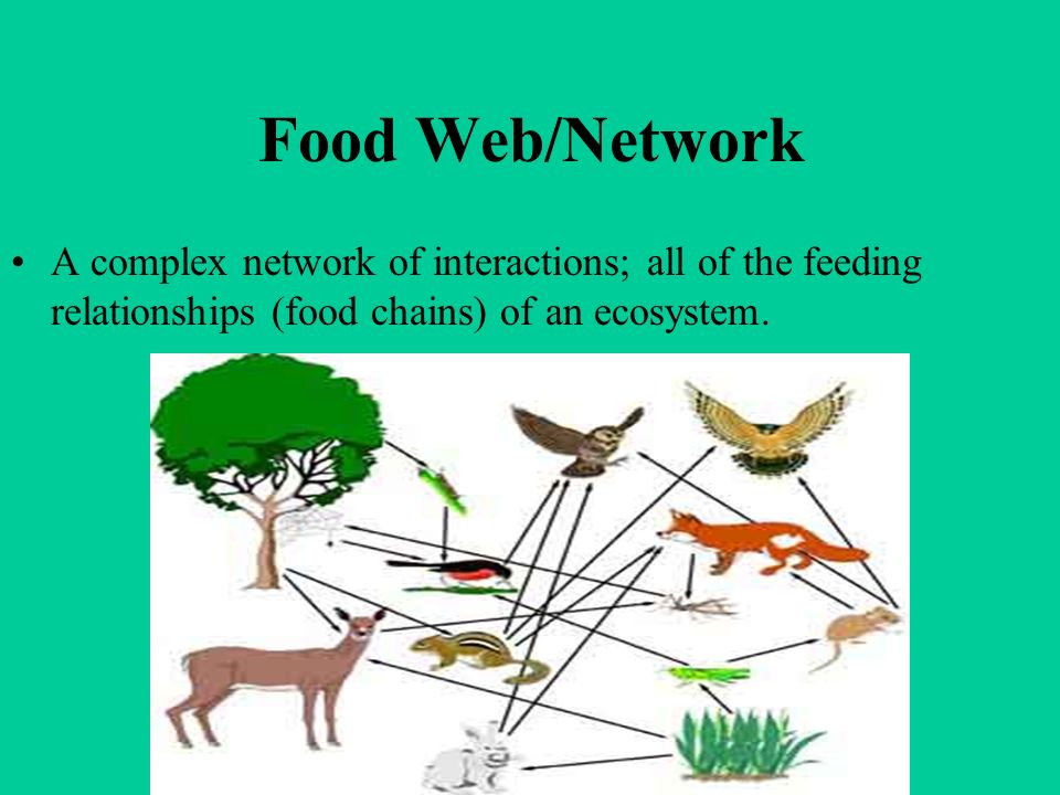 Food Web/Network A complex network of interactions; all of the feeding relationships (food chains) of an ecosystem.