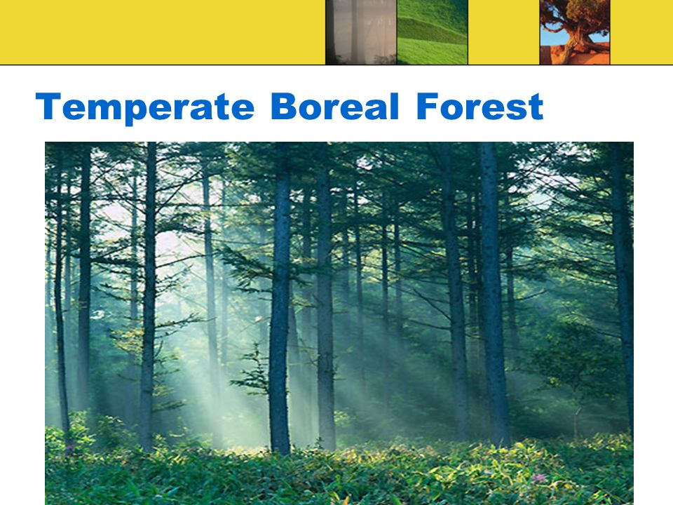 Temperate Boreal Forest