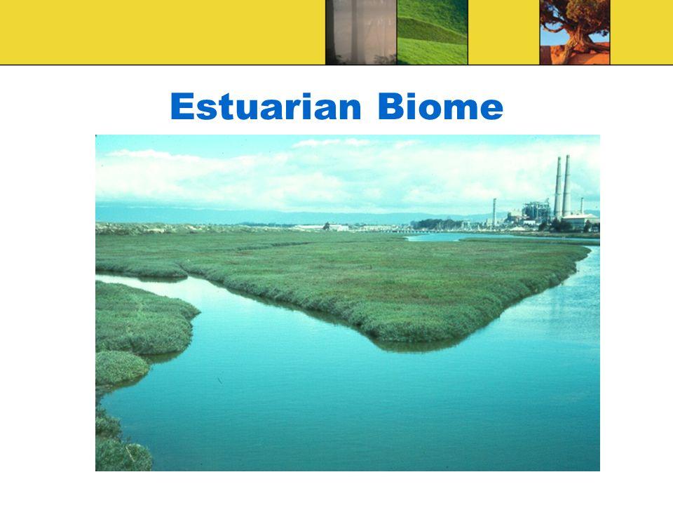 Estuarian Biome
