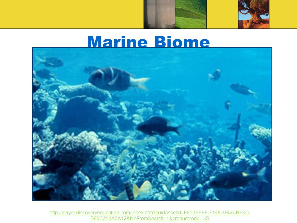 Marine Biome http://player.discoveryeducation.com/index.cfm guidAssetId=F810FE9F-719F-4B5A-BF3D-B90C214A6A12&blnFromSearch=1&productcode=US.