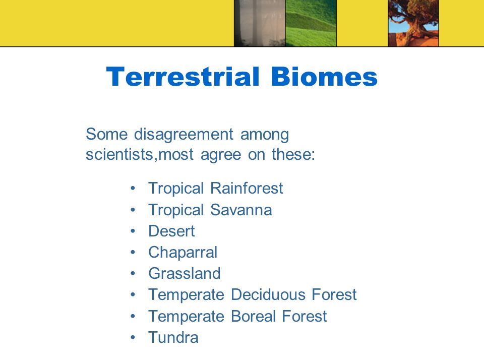 Terrestrial Biomes Some disagreement among scientists,most agree on these: Tropical Rainforest. Tropical Savanna.