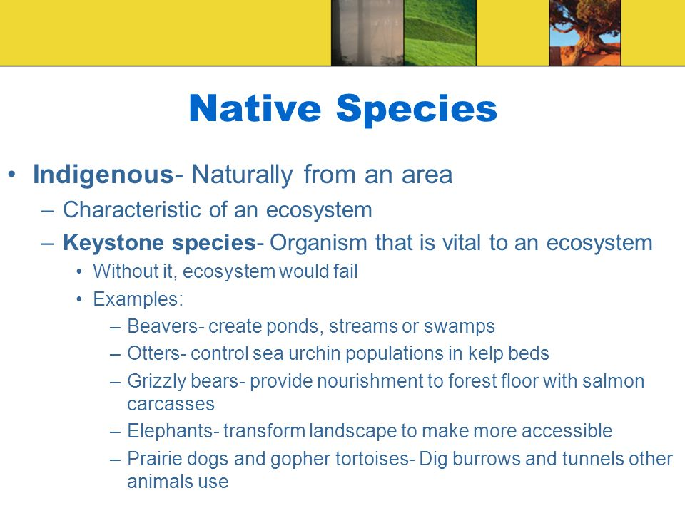 Native Species Indigenous- Naturally from an area