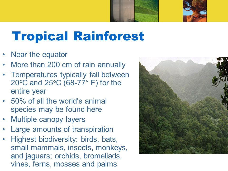 Tropical Rainforest Near the equator More than 200 cm of rain annually