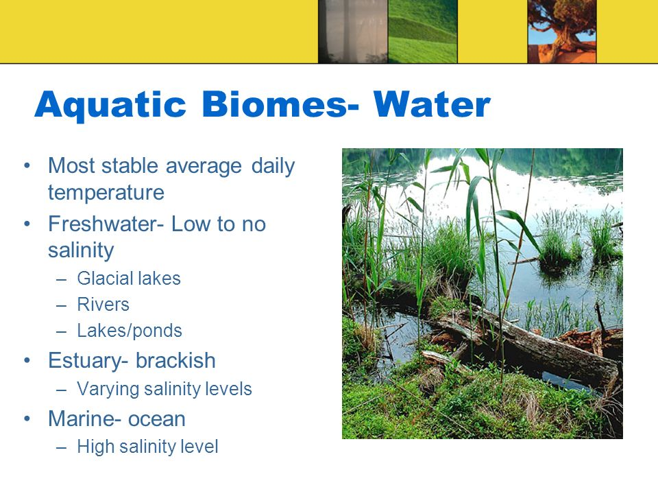 Aquatic Biomes- Water Most stable average daily temperature