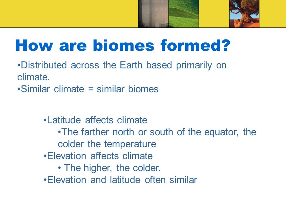 How are biomes formed Distributed across the Earth based primarily on climate. Similar climate = similar biomes.