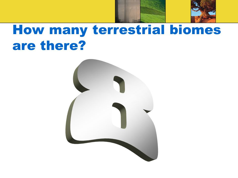 How many terrestrial biomes are there