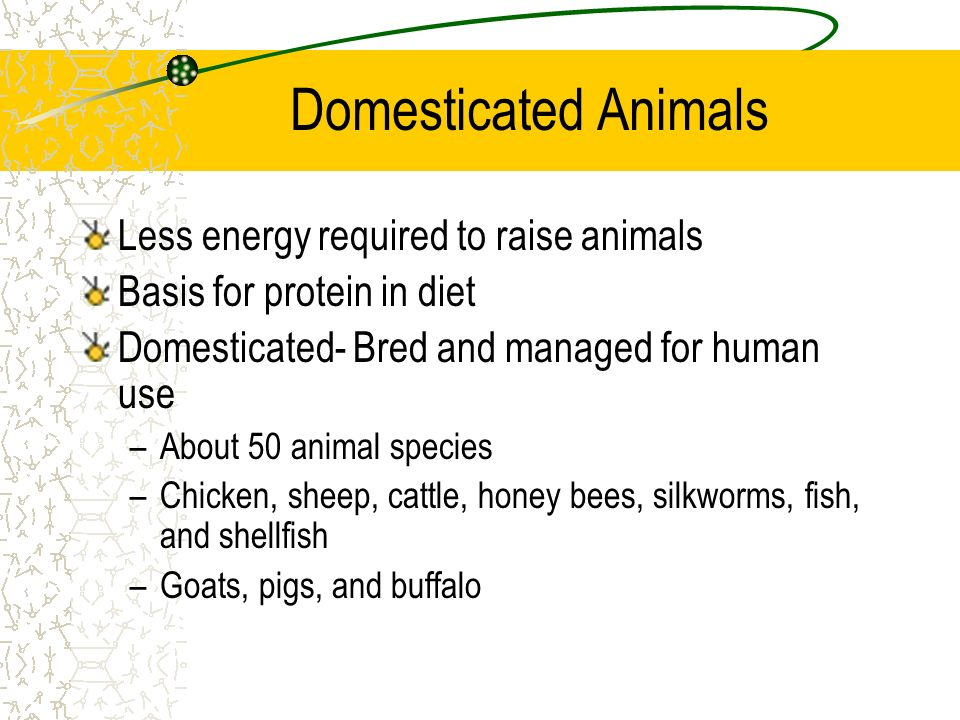 Domesticated Animals Less energy required to raise animals