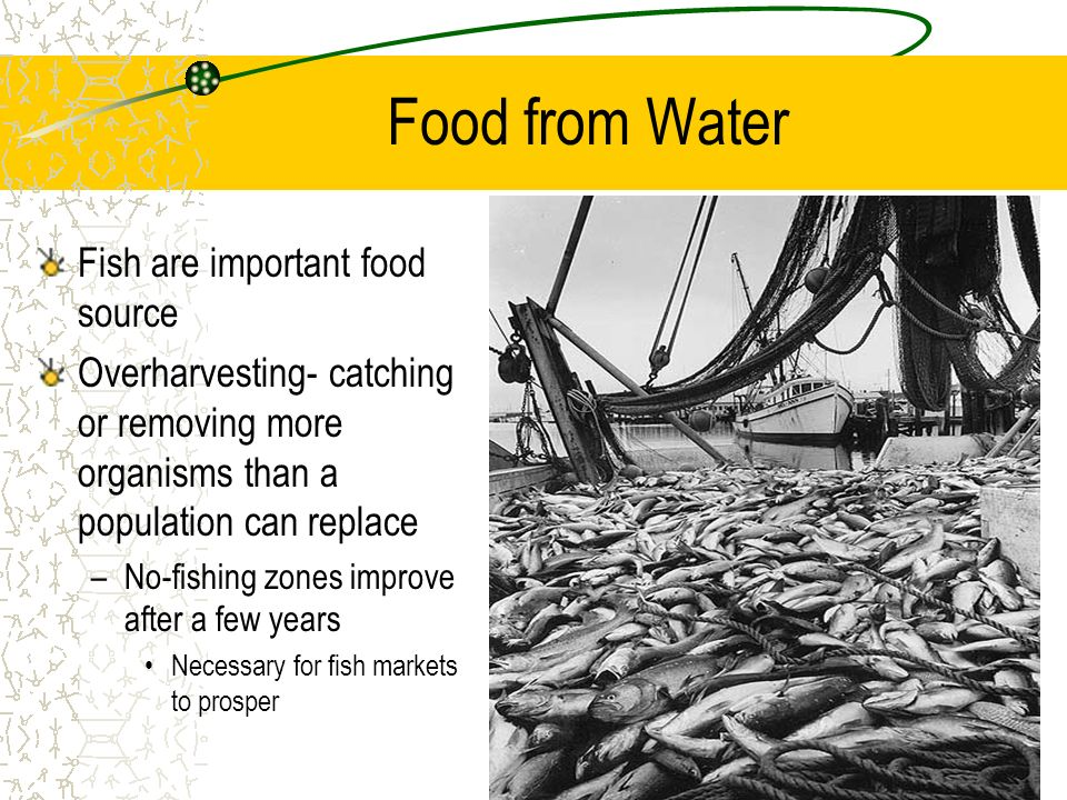 Food from Water Fish are important food source