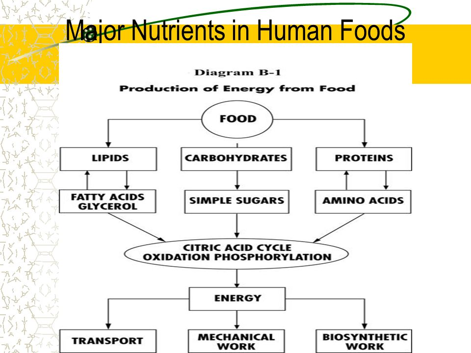 Major Nutrients in Human Foods