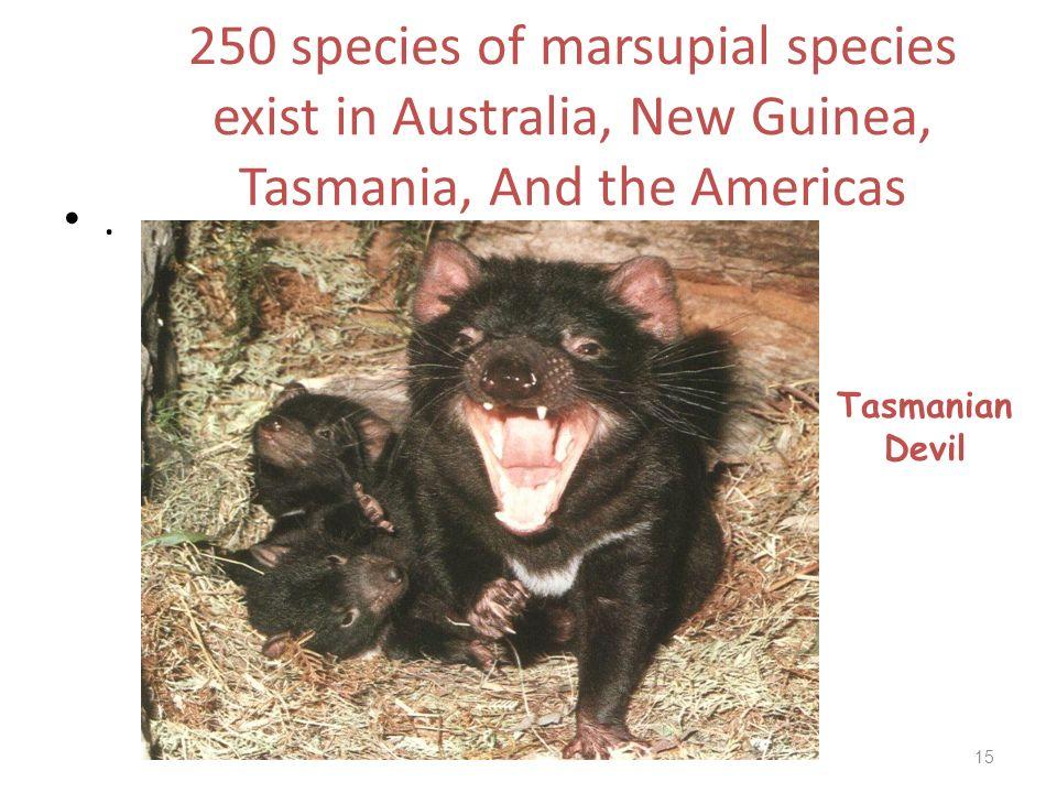 250 species of marsupial species exist in Australia, New Guinea, Tasmania, And the Americas