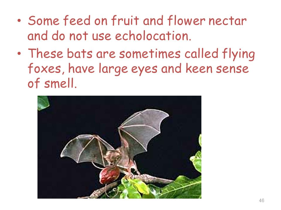 Some feed on fruit and flower nectar and do not use echolocation.