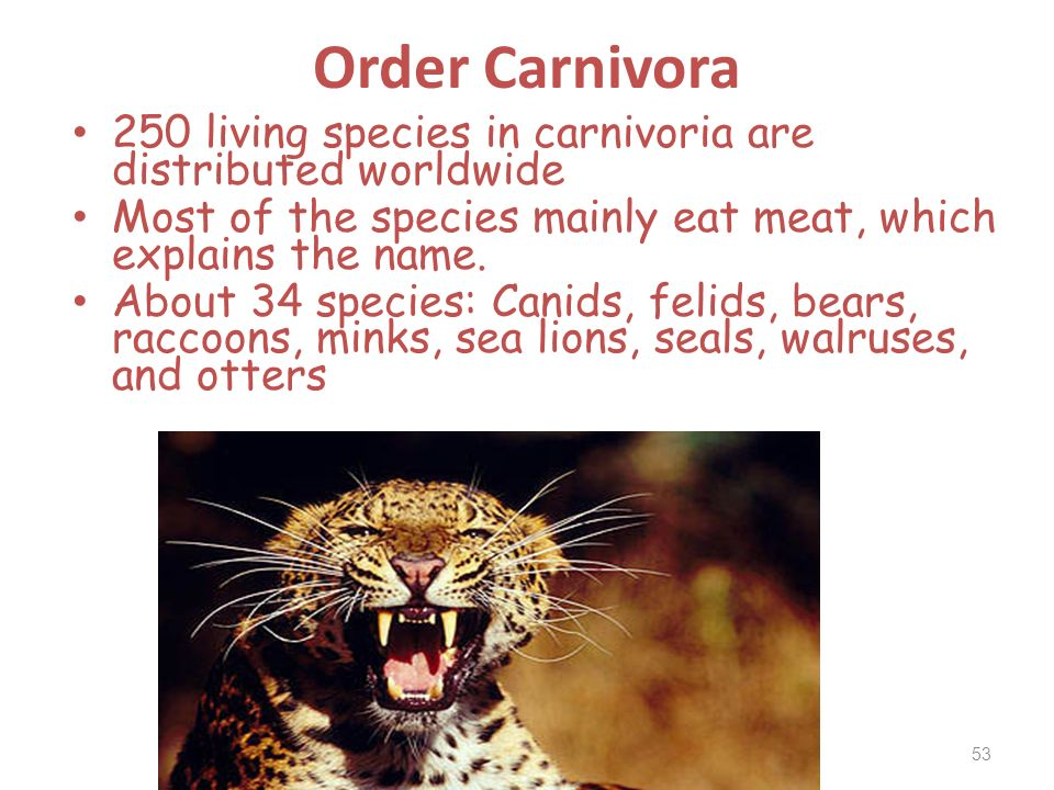 Order Carnivora 250 living species in carnivoria are distributed worldwide. Most of the species mainly eat meat, which explains the name.