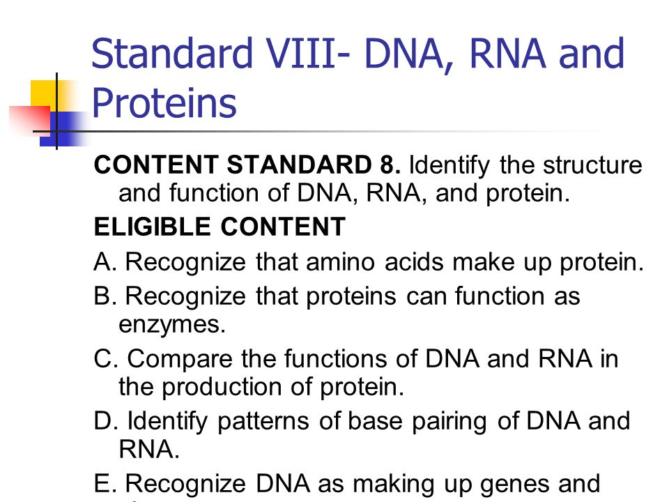identify the role of dna and rna in protein synthesis