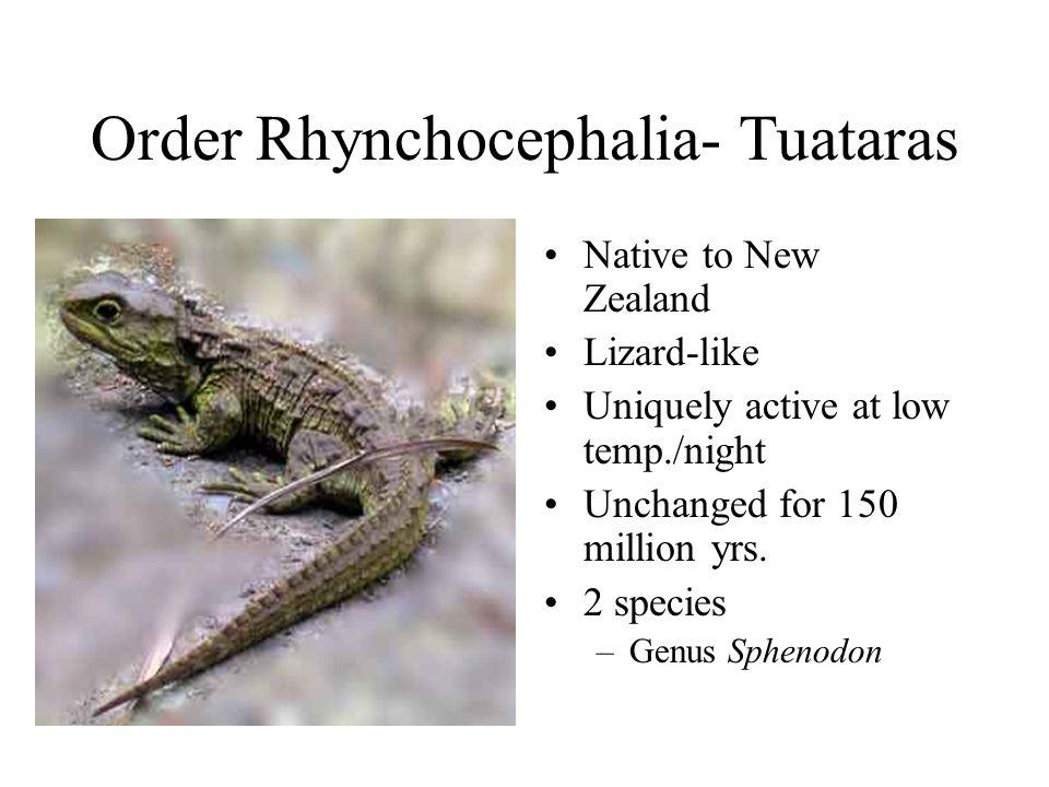 Order Rhynchocephalia- Tuataras